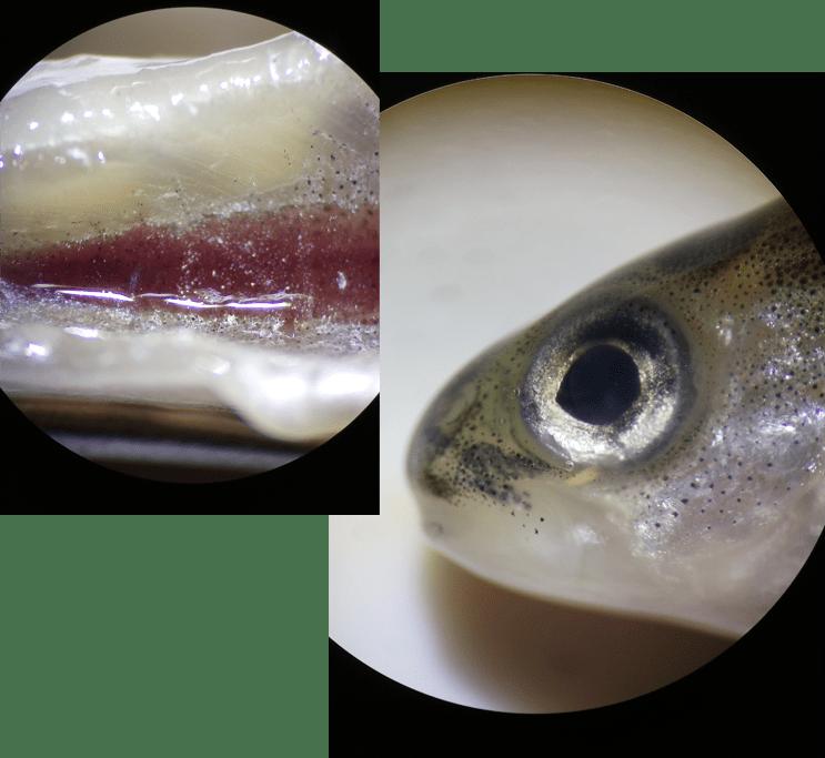 Aquaknowledge - peces